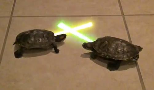 File:Jedi-turtles.jpg
