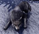 Wolf (Online)
