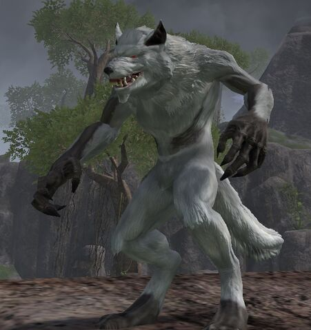 File:Alpha wolf.jpeg