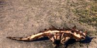 Thorn Gecko