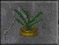 Aloe (Daggerfall).png