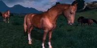 Wild Chestnut Horse