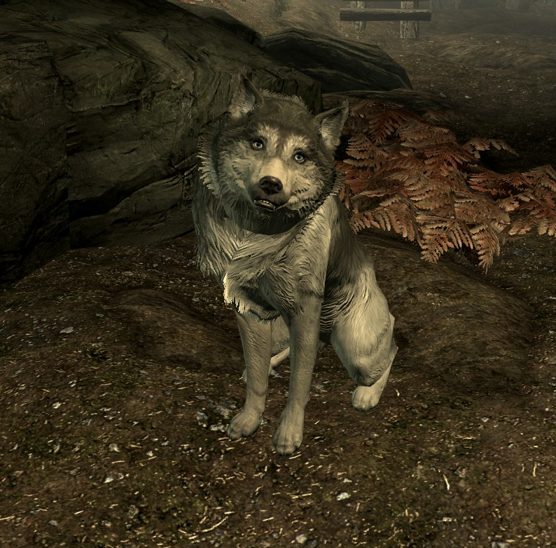 Husky Elder Scrolls Fandom Powered By Wikia