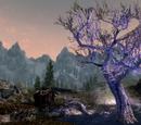 Sleeping Tree Camp