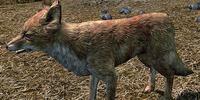 Fox (Skyrim)
