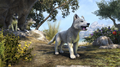 Crown Store White River Ice Wolf Pup.png