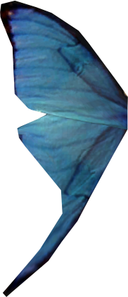 File:Blue butterfly wing.png