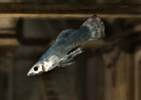 File:Abecean longfish.jpg