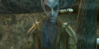 Conoon Chodala (Morrowind)