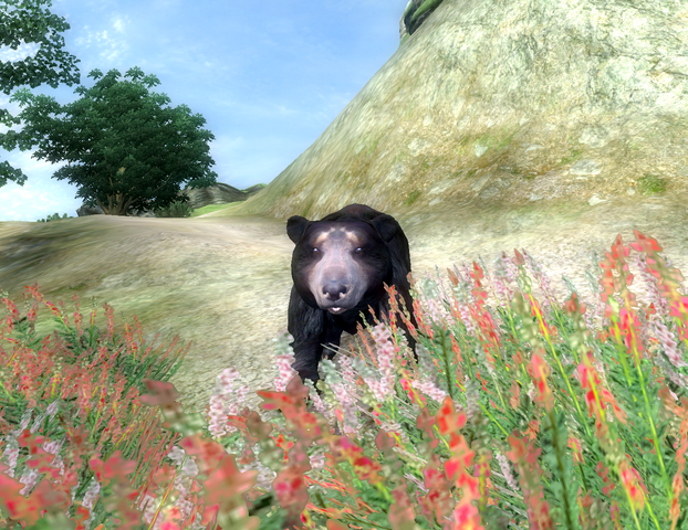 File:Bear Season.png