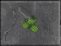 Green Berries (Daggerfall).png