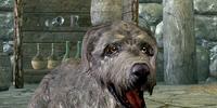 Ysgramor (Dog)
