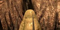 Fleshy Pod