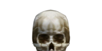 Skull of a Skaal Warrior