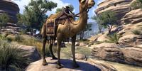 Hammerfell Camel