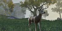 Deer (Online)