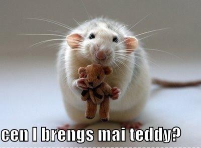 File:Teddy.jpeg