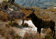 Deer Skyrim 1