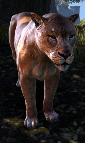 File:Forgets-To-Hunt TESO.png
