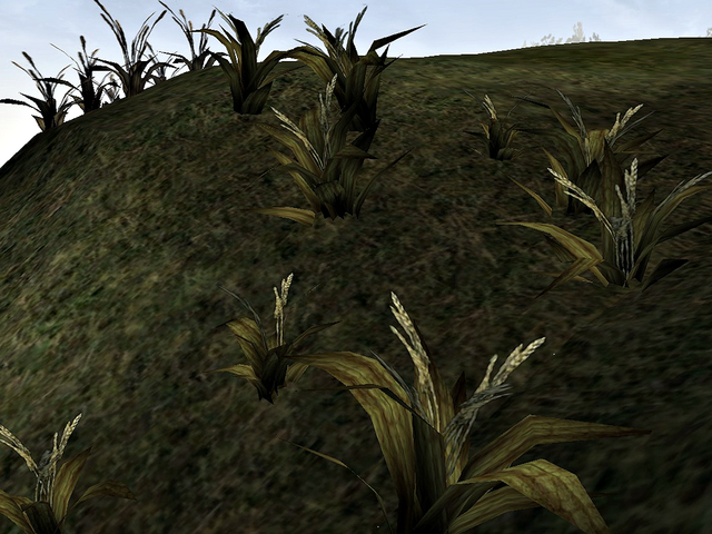 File:Wickwheat.png