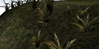 Wickwheat