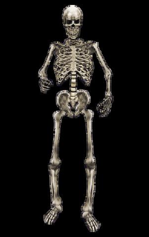 File:Skeleton MW.png