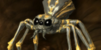 Pack Spider (Scroll)