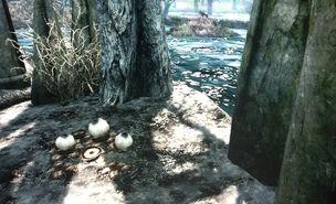 Swamp Fungal Pod