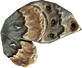 File:AncestorMothWing.png