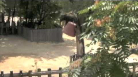 Kandula, National Zoo, insightful problem solving 2