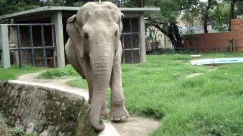 La Elefante Manyula Parque Zoologico Nacional de El Salvador