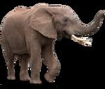 Elefant3.png