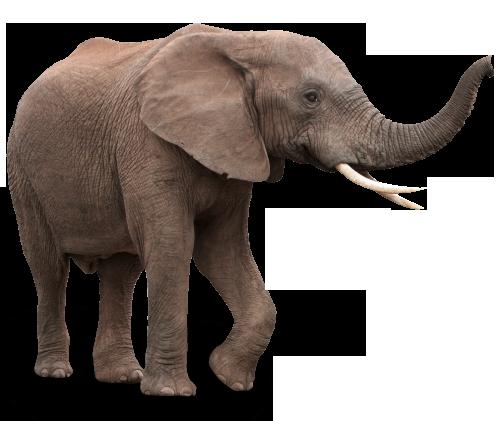 Datei:Elefant3.png