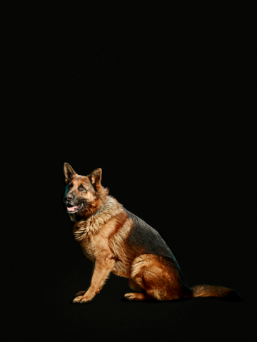 File:Toto promotional image.png