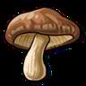 Goal Mushrooms