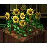Crop Sunflower Grown SW icon
