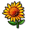 Goal sun flower