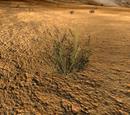 Fibre plant