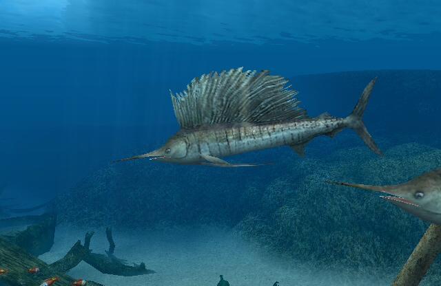 File:Sailfish 2.jpg