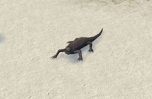 Galapagos Marine Iguana 1