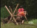 312 - Bamboo Jungle (052).png