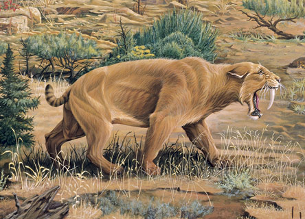 File:14 Sabretooth Cat.jpg
