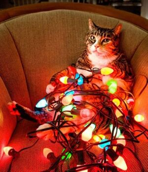 Lolcat-christmas-light-lolcatbuckaroo