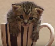 Announcer as Kitten