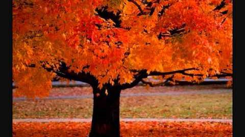 Four Seasons ~ Vivaldi
