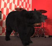 Bear-ERB-News