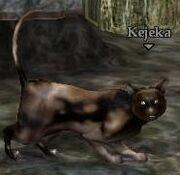 Kejeka