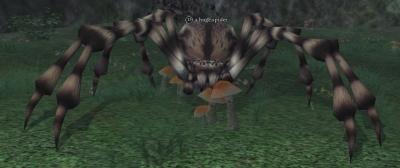 File:A huge spider.jpg