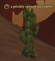 A prickly spined succulent