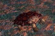A timorous tortoise